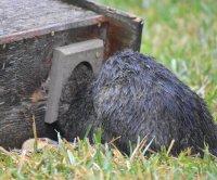 Florida animal rescuers free bobcat stuck in birdhouse