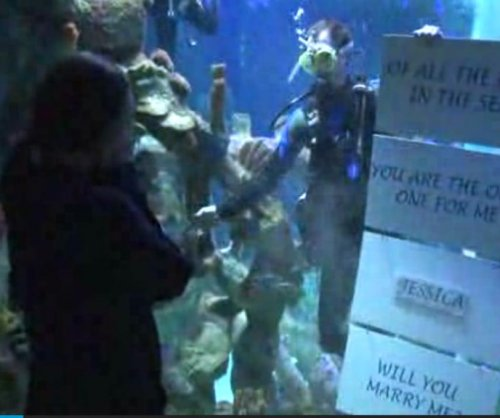 Aquarium worker proposes from inside shark tank