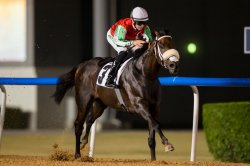 UPI Horse Racing Preview: Japan Cup highlights graded stakes
