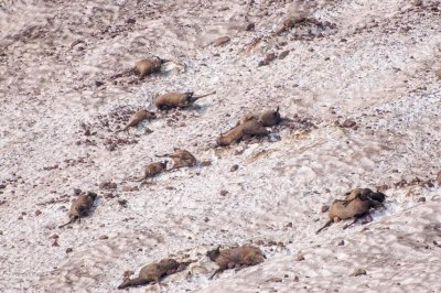 19 elk killed in Oregon avalanche