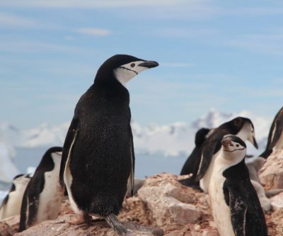 Picky penguins are more vulnerable to impacts of climate change