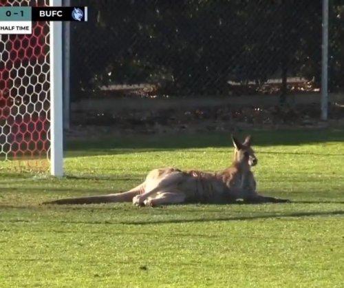 Kangaroo interrupts soccer game in Australia