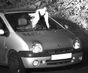 Swooping dove blocks speeder's identity from police camera