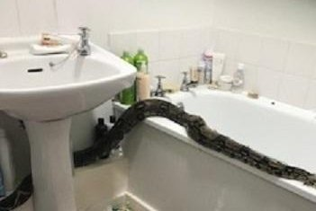 Woman finds large snake in apartment bathroom