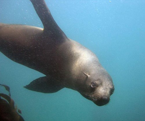 Study: deep-diving marine mammals suffer heart arrhythmias