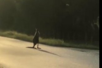 Escaped kangaroo hops loose in Florida street
