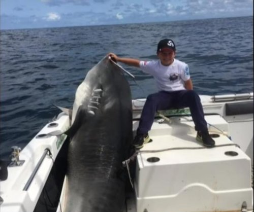 Boy, 8, may have broken record with 692-pound tiger shark