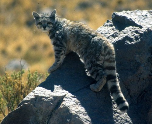 Report highlights risk of species extinction in Bolivia
