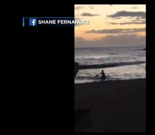 Man caught on video attacking a pregnant endangered seal in Hawaii