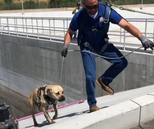 Dog rescued from water treatment plant basin by lasso