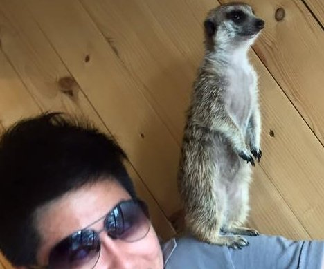Bangkok cafe offers up-close encounters with fennec foxes, meerkats