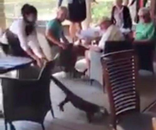 Goanna Girl: Waitress drags large reptile out of Australian restaurant