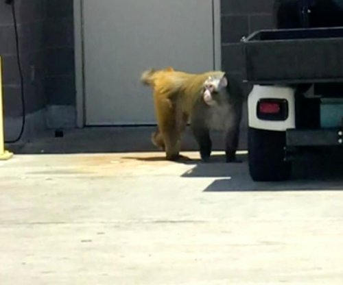 Monkey captured after running loose in San Antonio airport