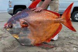 'Rare' tropical fish washes up on Oregon coast