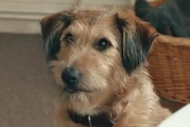 Robin Williams voices dog in first 'Absolutely Anything' trailer