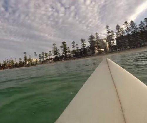 Surfer stalked by great white shark at Sydney beach in viral video