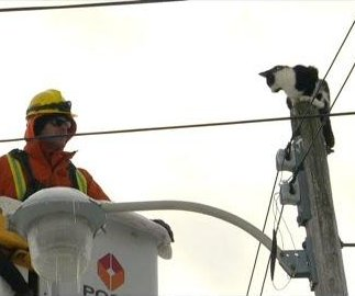Cat rescued from atop Toronto utility pole