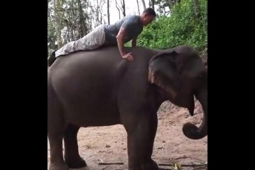 Man performs 22 push-ups on elephant's back in Thailand