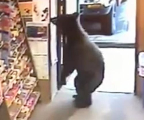 http://cdnph.upi.com/ph/st/th/8271498933411/2017/i/14989350041972/v1.2/Bear-strolls-through-Alaska-liquor-stores-open-door.jpg?lg=1