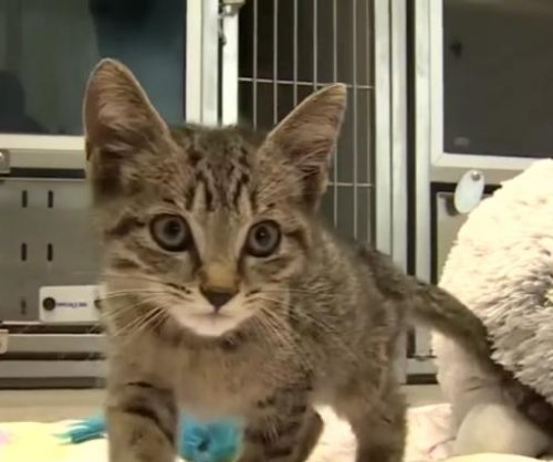 Kitten saved from traffic takes 80-mile Uber ride to rescue
