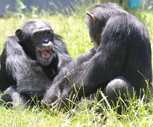 Last 50 federal research chimpanzees are headed to sanctuaries