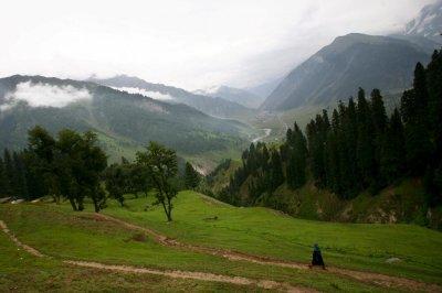 Pakistan plants 1 billionth tree to help reverse deforestation