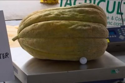North Carolina man grows world-record cantaloupe