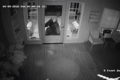 Bear's dental office break-in attempt caught on video