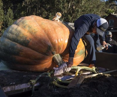2,350-pound pumpkin, named 'The Tiger King,' wins contest