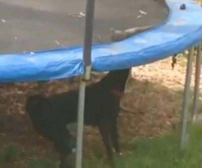 Dog bumps bottom of trampoline to help bird bounce