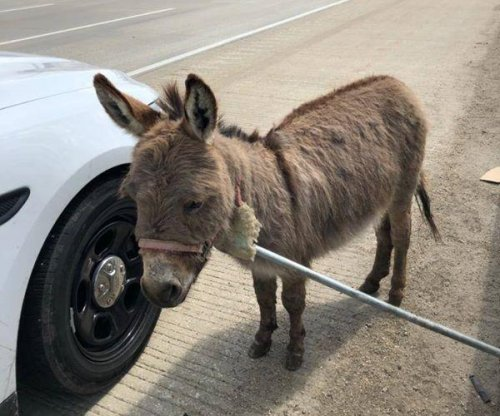 Deputy rescues loose donkey on Chicago highway