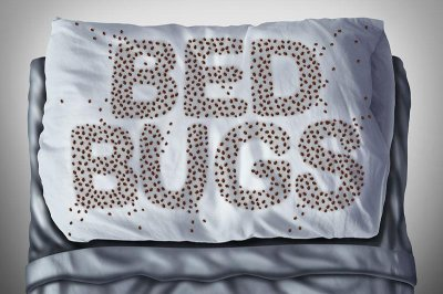 Fighting Back, Bedbugs Grow a Thicker Skin
