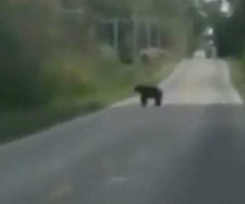 Ohio woman captures 'historic' footage of black bear mother and cubs