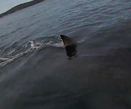 Shark circles Australian kayaker