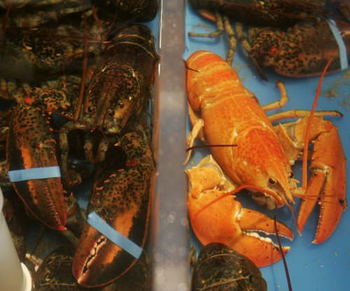 The key to a lobster's jellyfish consumption: Well-wrapped feces