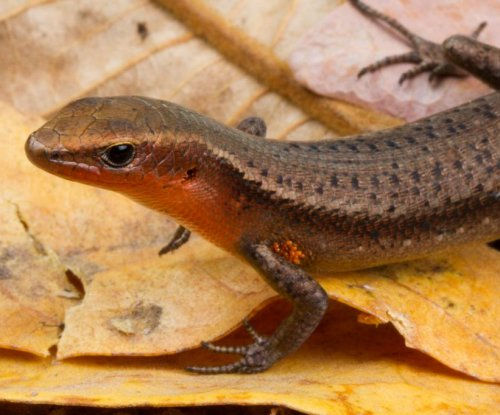 Weather-worn lizards more likely to survive climate change