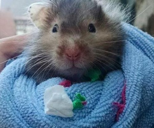 Dying hamster sets out to complete bucket list