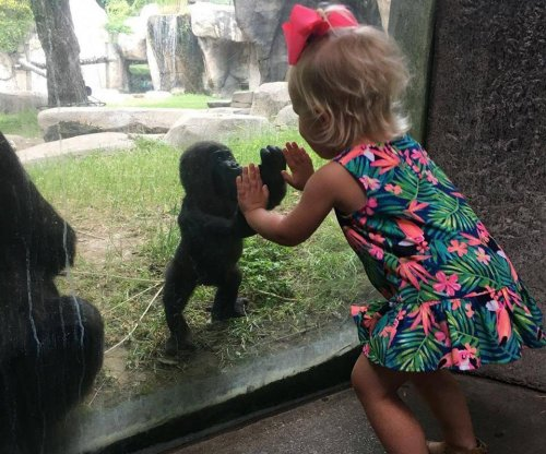 Baby gorilla, 2-year-old girl bond at Texas zoo