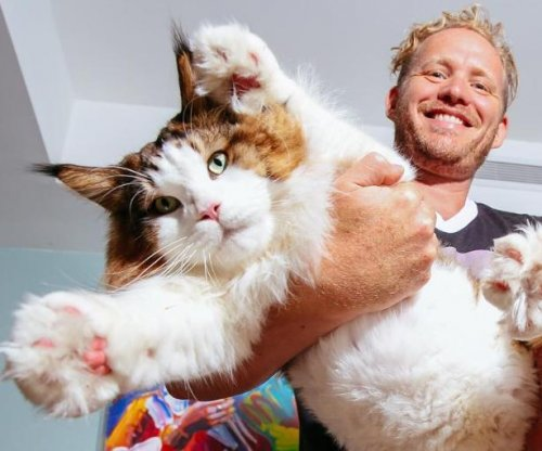 4-foot Maine Coon 'Sampson' is New York City's largest cat