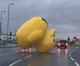 Runaway inflatable duck quacks up traffic on Glasgow road