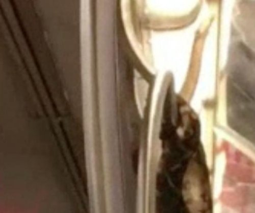 Snake hangs from pole for ride on New York subway