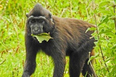 Monkey temporarily escapes enclosure at Ireland's Dublin Zoo