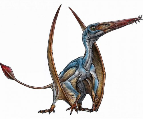 Scientists unearth new pterosaur species in Patagonia