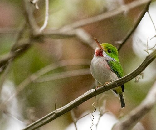 American birders anxious to explore, protect Cuban species