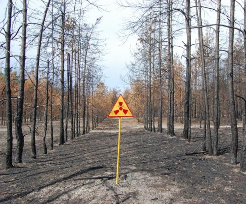 Study: Chernobyl area has 'abundant wildlife'