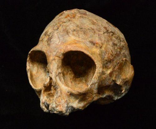 Ancient infant skull yields insights into human-ape lineage