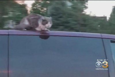 Family records cat's highway ride on van's roof