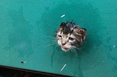 Florida firefighters rescue kitten with head stuck in generator