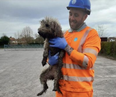 Dog rescued from sewer after chasing rat up outtake pipe