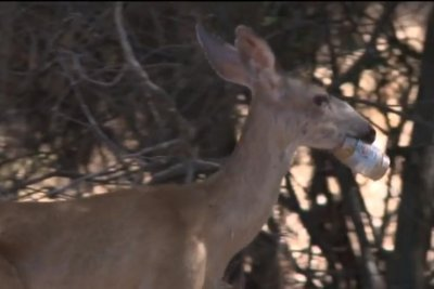 Watch:-Neighbors-want-rescue-for-deer-with-jaw-stuck-in-jar